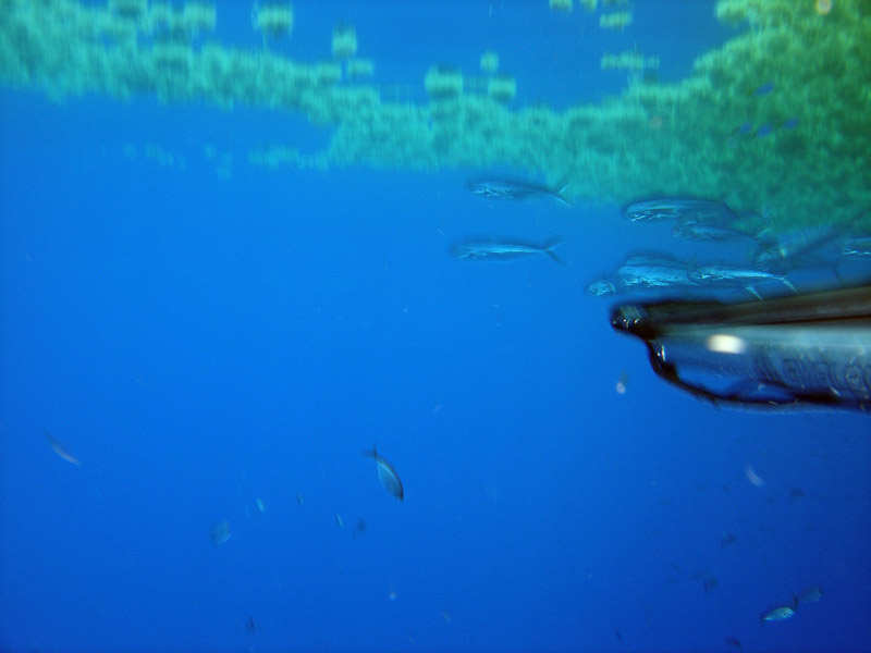 Spearfishflorida spearfishing your online resource to for Dolphin fishing florida