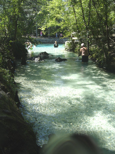 Pitt Spring - Snorkel This Freshwater Spring On The